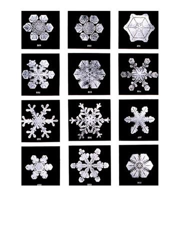 Snow Flakes.jpg