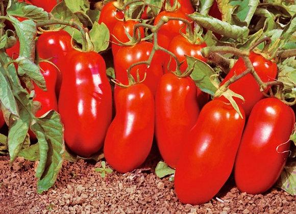 Tomato 'San Marzano'