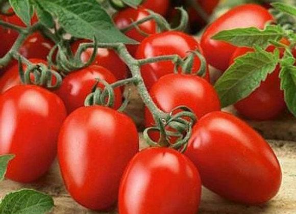 Tomato 'Roma VF'