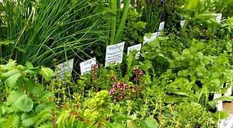Hilliside Herbs, Culinary Herb selection
