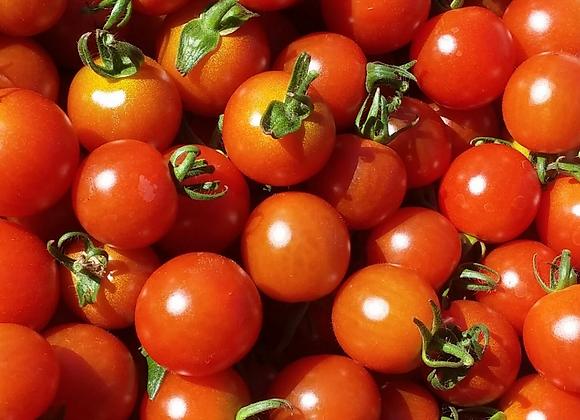 Tomato 'Gardeners Delight'