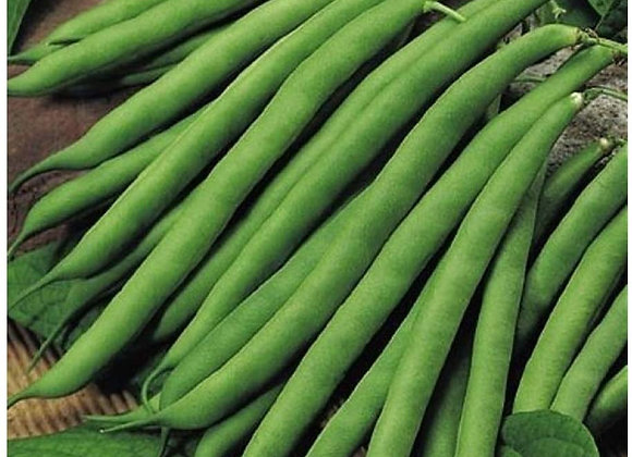 Climbing French Beans
