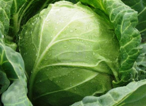 Cabbage (Ball Head)