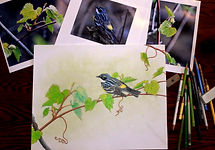 Diane Iverson Birds in Colored Pencil 20