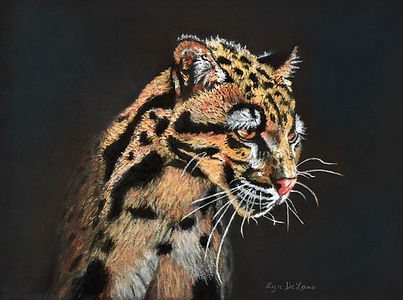 Leopard Spots.jpeg