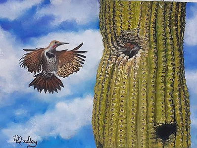gilded-flicker-feeding-young-in-saguaro-