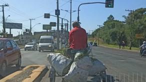 Um ano após aprovação, Prefeitura ainda não colocou em prática lei para acabar com as carroças