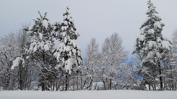 winter_winter_landscapes_landscape_photo