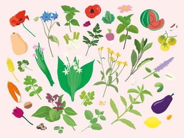 Manuel du Bon Sens Cuisinier : Plants