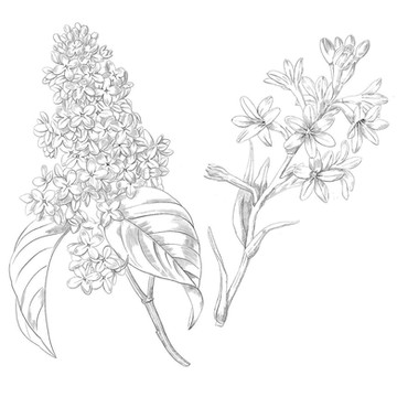 Maison Louis Marie - Lilac & Tuberose Flowers