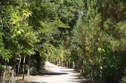 Forêt / Forest