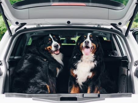 6 Tips for Adorable Pet Portraits