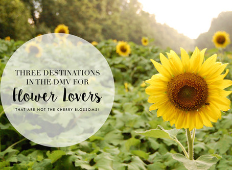 Three Destinations in the DMV for Flower Lovers (that are not the cherry blossoms!)