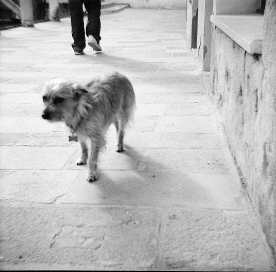 Venedig_2009_74.jpg