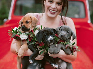 RACHEL_BUCKLEY_WEDDINGS322-Puppies-3361.