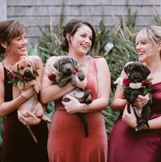 Rachel Buckley Weddings
