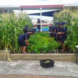 School Vegetable Gardens