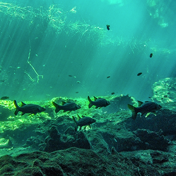 Discover Scuba Diving Cenote & Reef