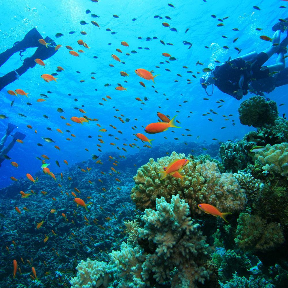 Cenote & Reef Combo