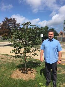 Our Beautiful new Redbud tree!