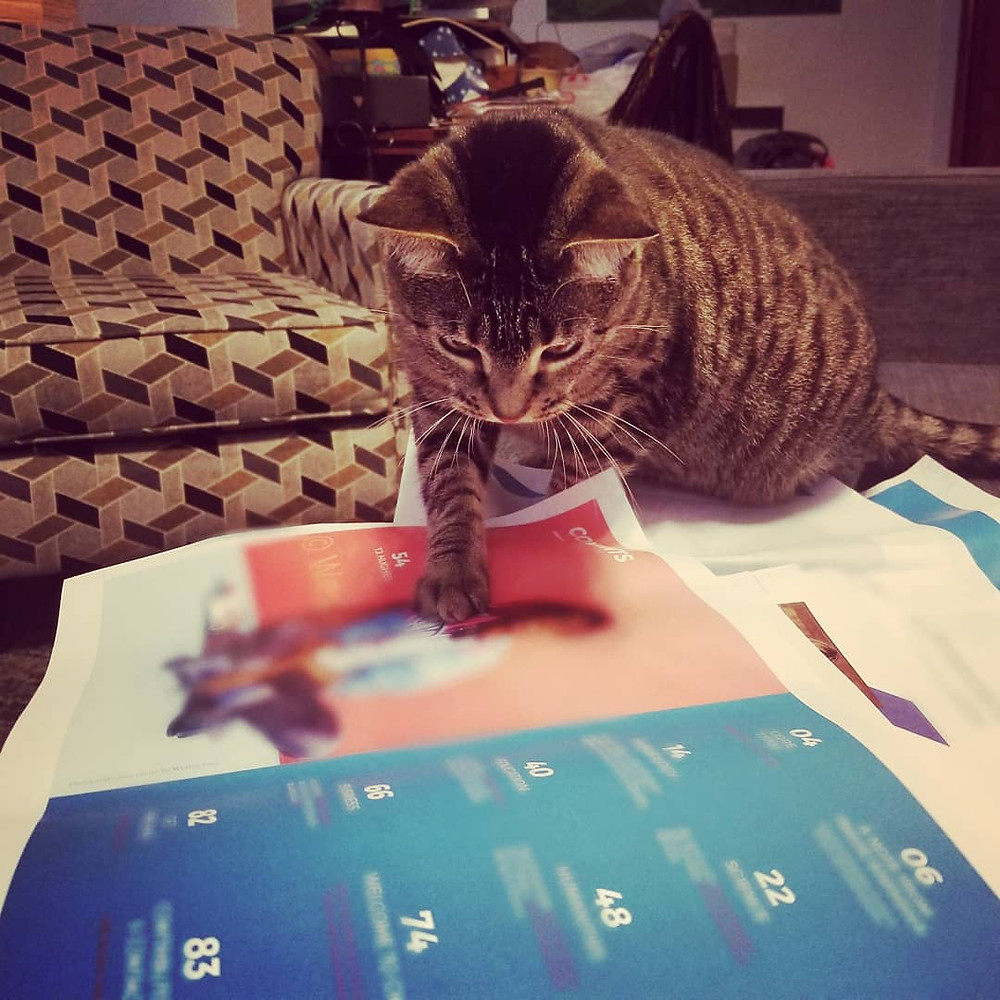 A brown cat paws at magazine draft printouts