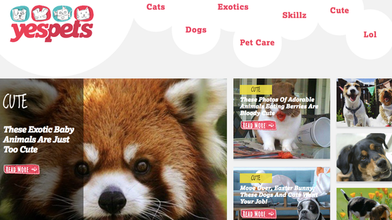 That Time I Ran a Website and Posted Nothing but Cute Animals (YesPets)