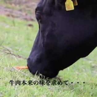 放牧 動画