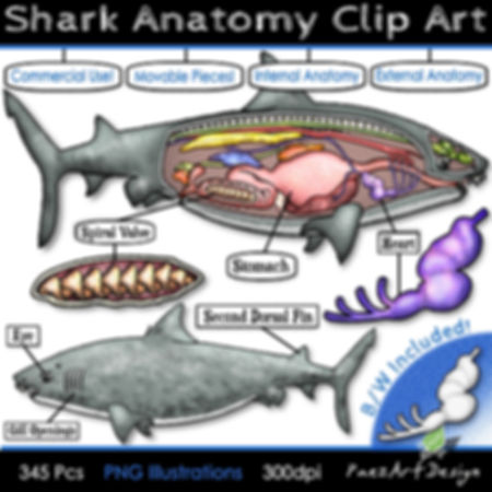 Shark Anatomy Clip Art Illustrations | Science Graphics | PaezArtDesign Digital Art