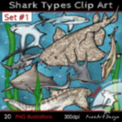 Shark Types Clip Art Illustrations | Set #01 | Science & Animal Gaphics for education | PaezArtDesign Digital Art