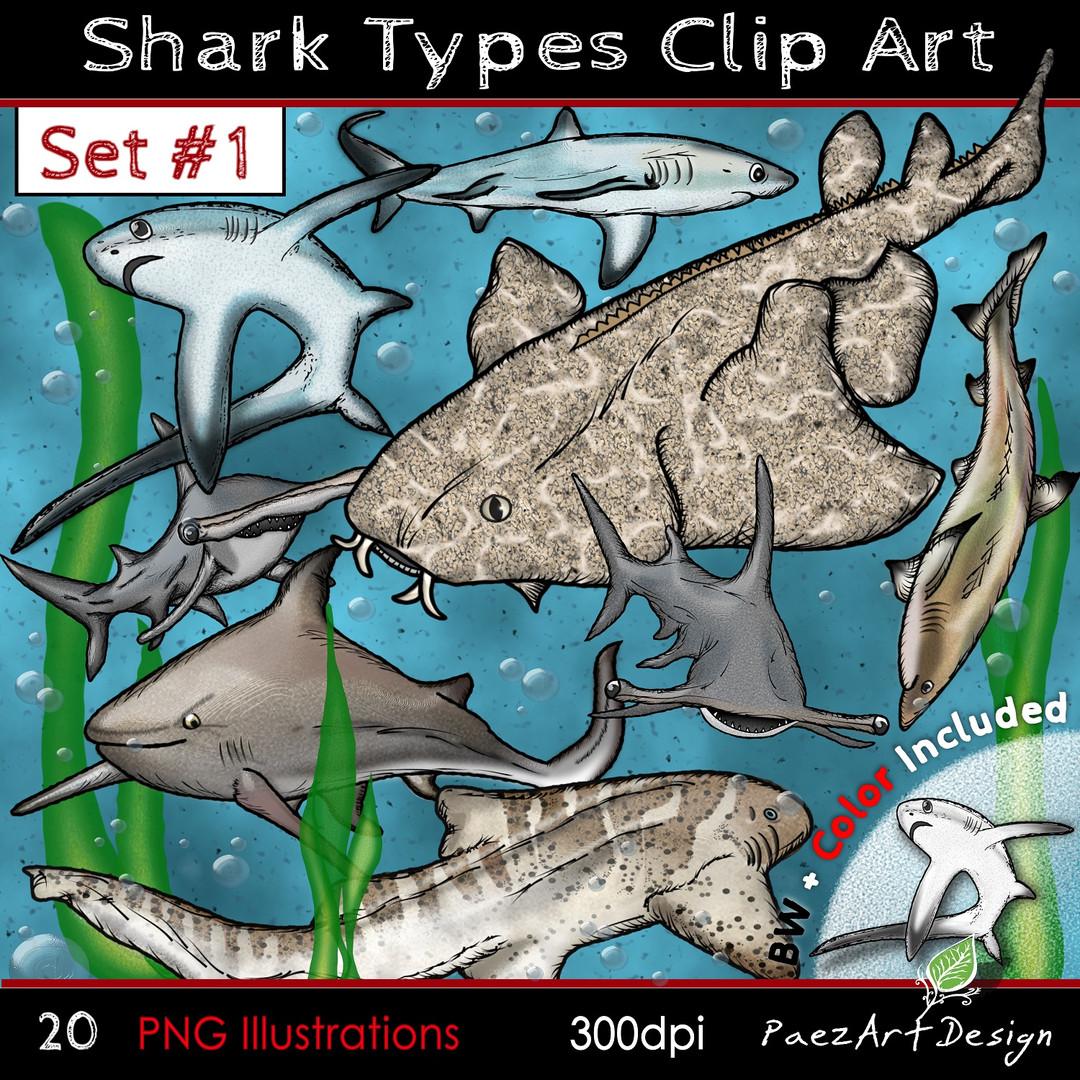 Shark Types #1 Clip Art Illustrations {PaezArtDesign}