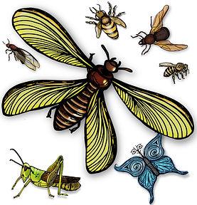 PaezArtDesgn Clip Art Illustrations | Bugs Insects | Digital Art Graphics