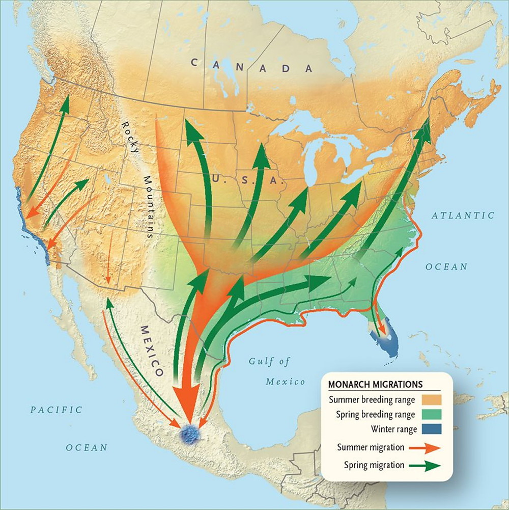 monarch migration pathways image
