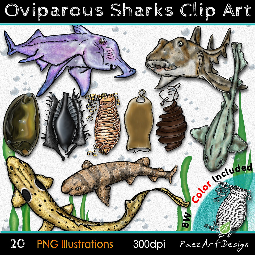Oviparous Sharks Clip Art Illustrations {PaezArtDesign}