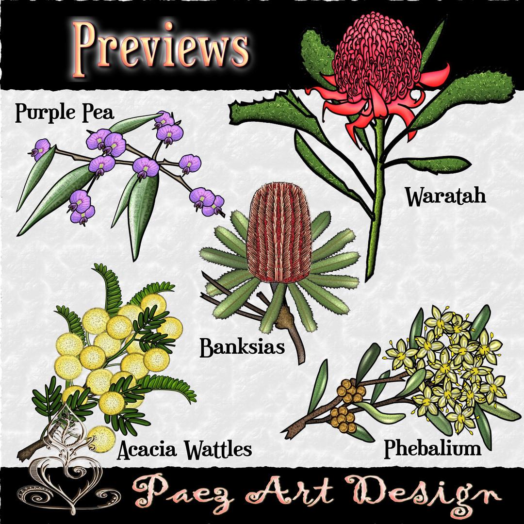 Australian Native Plant Clip Art {PaezArtDesign}