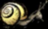 Snail Graphic | Insect Clip Art Images | PaezArtDesign