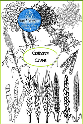 Prehistoric Era Clip Art   Food: Gatherer- Grains {PaezArtDesign}