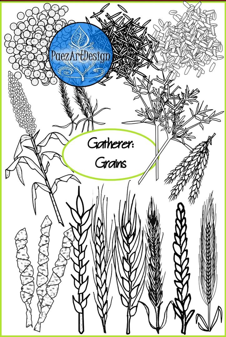 Prehistoric Era Clip Art | Food: Gatherer- Grains {PaezArtDesign}