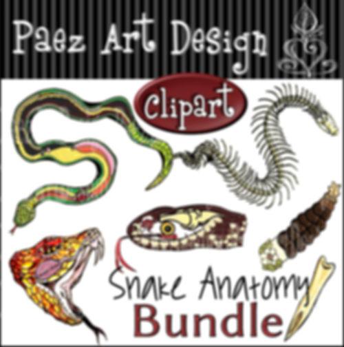 Snake Anatomy Clip Art Bundle