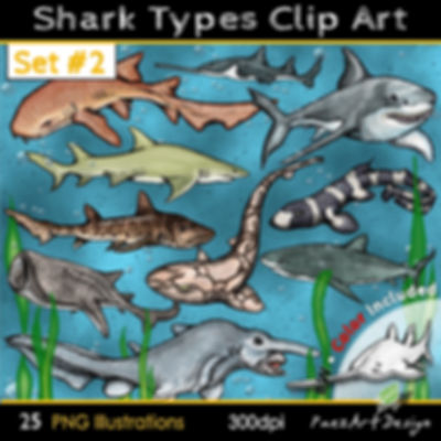 Shark Types Clip Art Illustrations | Set #02 | Science & Animal Gaphics for education | PaezArtDesign Digital Art