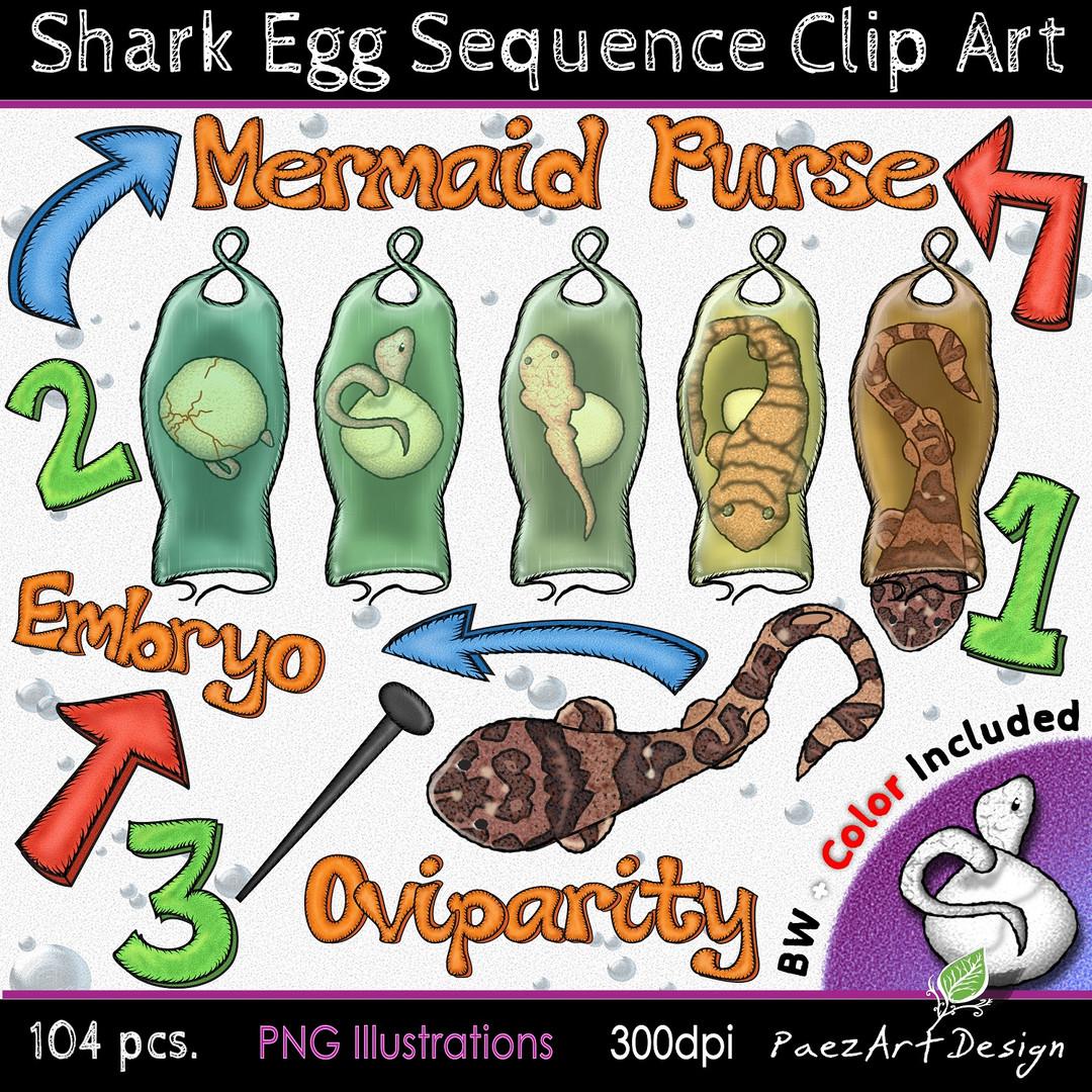 Shark Egg Sequence Clip Art Illustrations {PaezArtDesign}