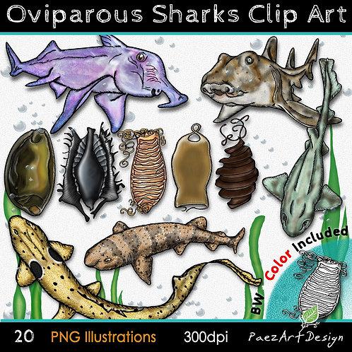 Oviparous Sharks