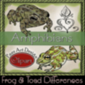 PaezArtDesign Amphibian Clip Art- Frog & Toad Differences