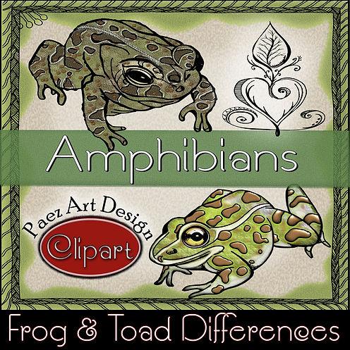 PaezArtDesign Amphibian Clip Art- Frog & Toad Differences