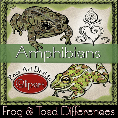 Amphibians: Frog & Toad Differences