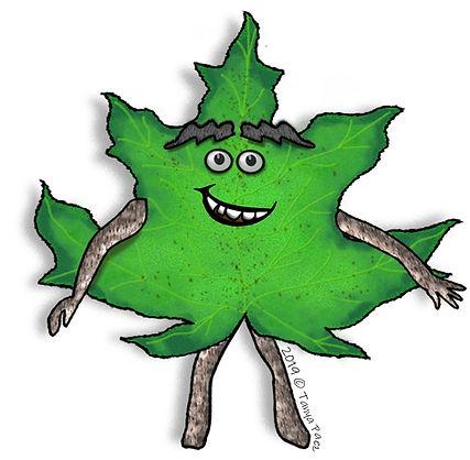 PaezArtDesign Nature Pal Clip Art Illustrations: Maple Leaf Change | Seasonal & Nature Graphics for Education