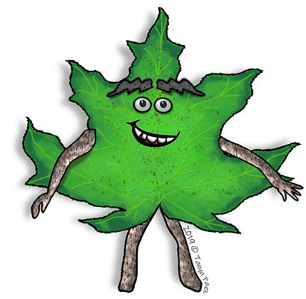 PaezArtDesign Nature Pal Clip Art Illustrations: Maple Leaf Change   Seasonal & Nature Graphics for Education