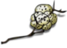 PaezArtDesign Clip Art Amphibian Eggs