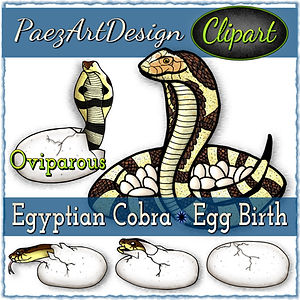 Egyptian Cobra Egg Birth Clip Art {PaezArtDesign}