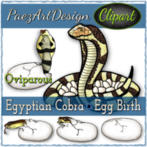 Oviparos Snake Birth: Egyptian Cobra Clip Art {PaezArtDesign}