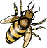 Western Honey Bee {PaezArtDesign}